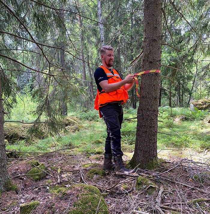 Michael Larsson markerar träd för avverkning